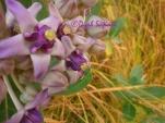 flower in summer